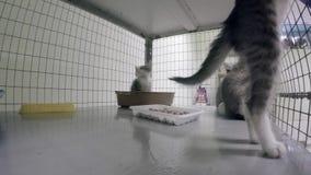 Gatitos enjaulados en un refugio para animales metrajes