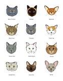 Gatitos felinos de los bozales de la colección stock de ilustración