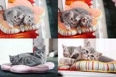 Gatitos, gatos y almohadas, multicam, rejilla 2x2 Fotografía de archivo libre de regalías