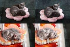 Gatitos, gatos y almohadas, multicam, rejilla 2x2 Foto de archivo libre de regalías