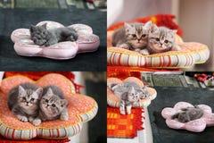 Gatitos, gatos y almohadas, multicam, rejilla 2x2 Imagen de archivo libre de regalías
