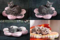 Gatitos, gatos y almohadas, multicam, rejilla 2x2 Fotos de archivo libres de regalías