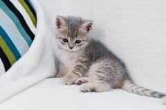 Gatitos grises que juegan en un sofá blanco fotografía de archivo