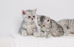 Gatitos grises que juegan en un sofá blanco imagen de archivo libre de regalías