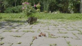 Gatitos hambrientos jovenes lindos que comen el alimento para animales junto afuera en el patio trasero - almacen de video