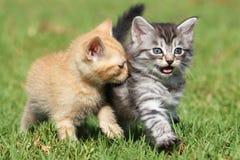 Gatitos lindos Imagen de archivo libre de regalías