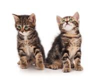 Gatitos lindos Fotos de archivo
