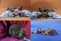 Gatitos lindos con los macarons, multicam, pantallas de la rejilla 2x2 Imagenes de archivo