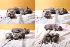 Gatitos lindos del bebé que juegan en el dormitorio, cama, pantallas de la rejilla 2x2 del multicam Imagenes de archivo