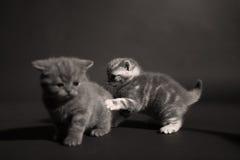 Gatitos lindos en el piso Fotografía de archivo libre de regalías