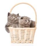 Gatitos lindos en la cesta que mira lejos Aislado en el fondo blanco Fotos de archivo