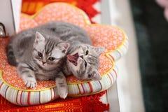 Gatitos lindos en una almohada foto de archivo