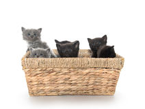 Gatitos lindos en una cesta foto de archivo
