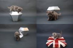 Gatitos lindos que juegan con el cristal, rejilla 2x2, para las pantallas Fotografía de archivo libre de regalías