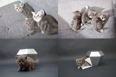 Gatitos lindos que juegan con el cristal, rejilla 2x2, para las pantallas Fotografía de archivo