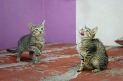 gatitos mestizos lindos que juegan en el sofá fotografía de archivo libre de regalías