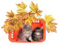 Gatitos mullidos lindos Fotos de archivo