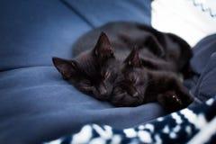 Gatitos negros el dormir en una cama Foto de archivo libre de regalías