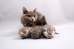 Gatitos nuevamente llevados, primer día Fotografía de archivo