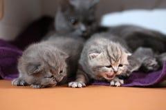 Gatitos nuevamente llevados, primer día Imagen de archivo libre de regalías