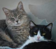 Gatitos perezosos Fotos de archivo