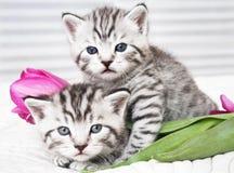 Gatitos preciosos con las flores imagenes de archivo