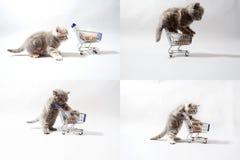 Gatitos que comen de un carro de la compra, pantalla de la rejilla 2x2 Imagen de archivo libre de regalías