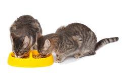 Gatitos que comen el alimento Fotografía de archivo