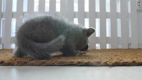 Gatitos que comen el alimento para animales de una estera de puerta metrajes