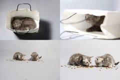 Gatitos que comen el alimento para animales del piso, multicam, pantalla de la rejilla 2x2 Fotos de archivo libres de regalías