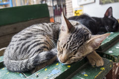Gatitos que duermen dulce Fotos de archivo