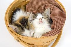 Gatitos que duermen en una cesta Foto de archivo libre de regalías