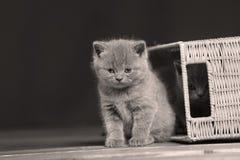 Gatitos que juegan con algunos cajones de madera Imagen de archivo libre de regalías