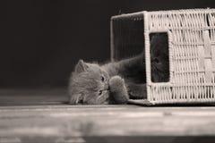 Gatitos que juegan con algunos cajones de madera Fotografía de archivo libre de regalías