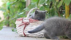 Gatitos que juegan en una cesta hacia fuera en la yarda almacen de video