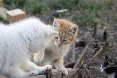 Gatitos que juegan y que saltan junto Fotos de archivo