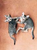 Gatitos que luchan fotografía de archivo