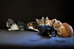 Gatitos que miran para arriba Imagen de archivo