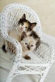Gatitos que presentan en silla de mimbre Fotografía de archivo