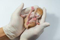 Gatitos recién nacidos Imágenes de archivo libres de regalías