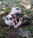 Gatitos recién nacidos pets fotografía de archivo