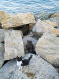 Gatitos salvajes que viven en las rocas Foto de archivo libre de regalías