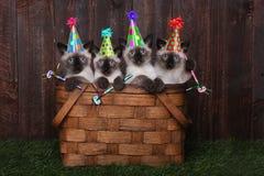 Gatitos siameses que celebran un cumpleaños con los sombreros Imagen de archivo
