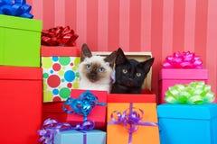 Gatitos siameses y negros en regalos de Navidad Fotos de archivo