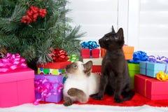 Gatitos siameses y negros en regalos de Navidad Foto de archivo