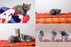 Gatitos, tazas y una bandera de Gran Bretaña, multicam imagen de archivo libre de regalías
