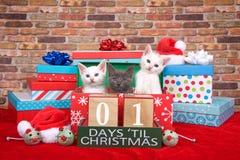 Gatitos un día hasta la Navidad imagenes de archivo