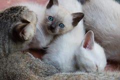Gatitos y gato de la mamá fotos de archivo