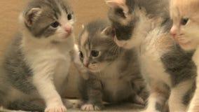 gatitos y gatos 5 27 metrajes