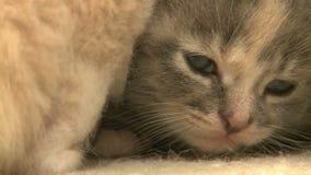 gatitos y gatos 18 27 almacen de video
